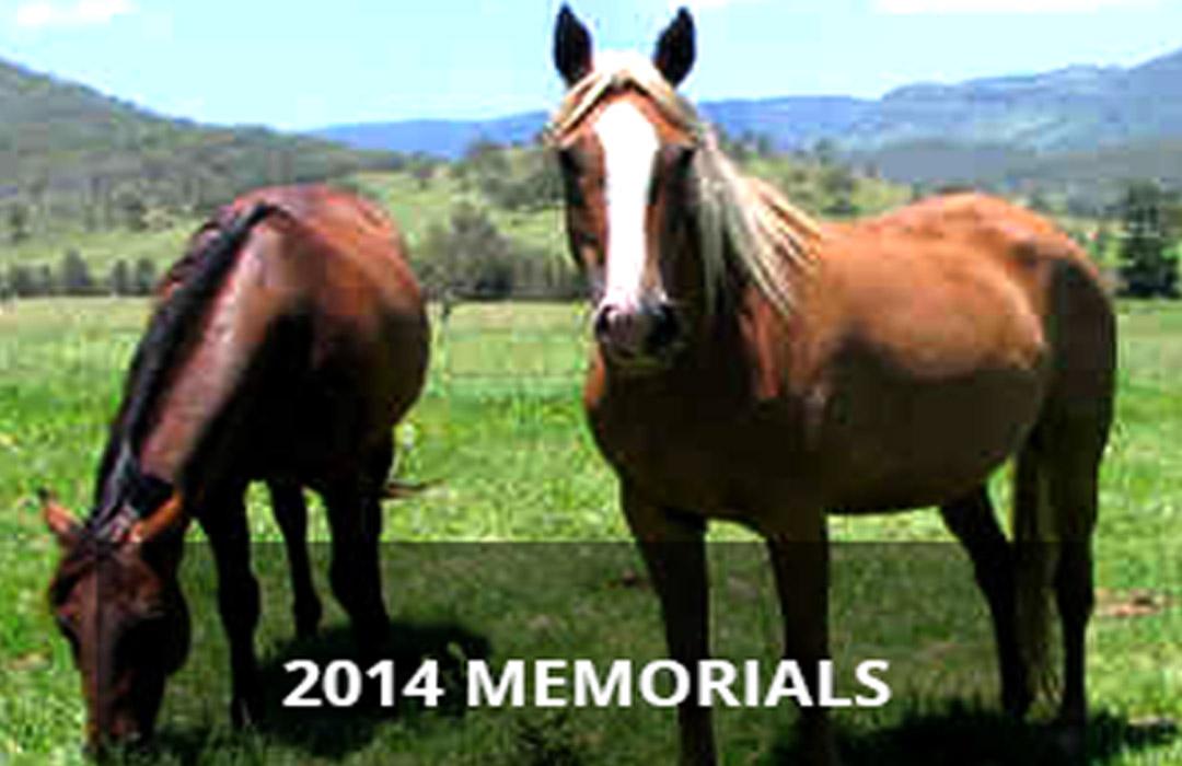 2014 Memorial