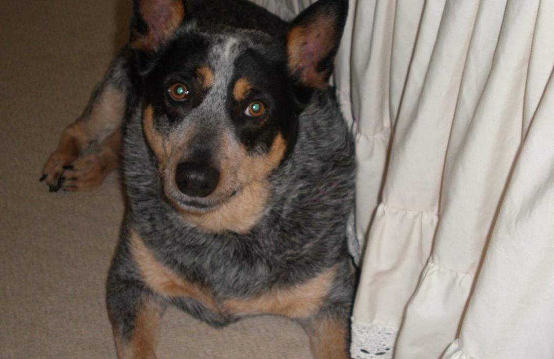 Jenny Blue Dog Rehburg
