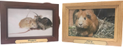 TINY PET PREM 8 SOLID TIMBER ROSEWOOD OR OAK PHOTO BOX