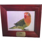 TINY PET PREM 9 SOLID TIMBER FRAME STAINED IN ROSEWOOD